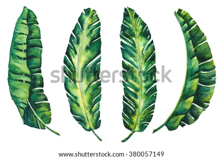banana leaves tropical exotic leaf  watercolor for your created design wallpaper vintage Hawaii style isolated on white background illustration  - stock photo