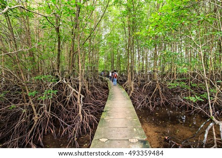 Bang Kayak is a largest mangrove forests in Asia, Krasaop natural park, Koh Kong, Cambodia