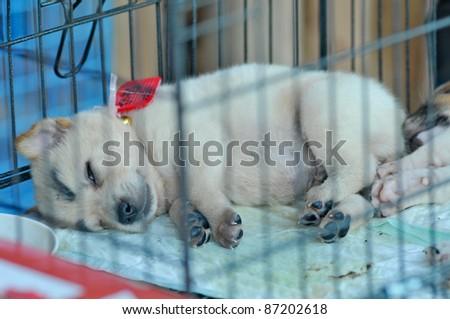 BANGKOK, THAILAND - OCTOBER 18: A dog, a flood of immigrants during the monsoon season in Bangkok, Thailand on October 18, 2011. - stock photo