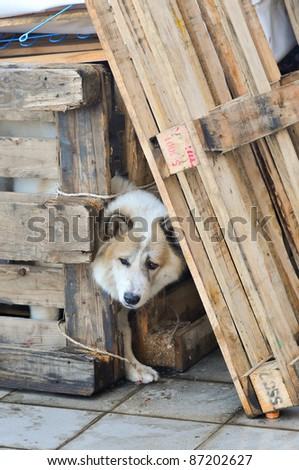 BANGKOK, THAILAND - OCTOBER 18: A dog, a flood of immigrants during the monsoon season in Bangkok, Thailand on October 18, 2011. - stock photo