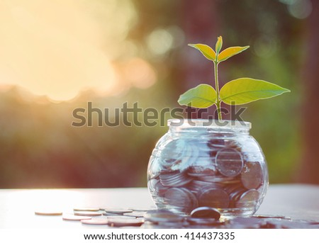 bank,money,Coins,Concept,Tree, Sprout growing on glass piggy bank with sunset light in saving money concept - stock photo