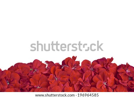 Banner of beautiful red flowers
