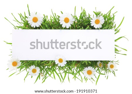 Banner with grass and flowers isolated on white background - stock photo