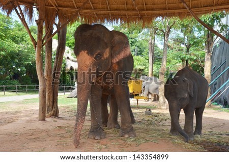 BanTaKlang Elephant Village (Study Center) Surin Thailand