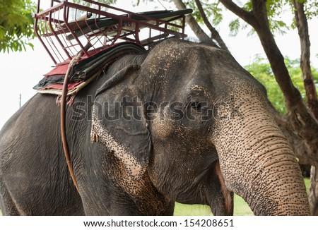 BanTaKlang Elephant Village (Study Center) Surin Thailand - stock photo