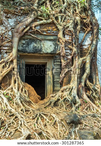 banyan tree roots in ruin Ancient temple Koh Ker in Siem Reap, Cambodia.
