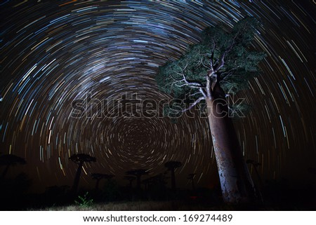 Baobab and night sky with star trails. Madagascar - stock photo