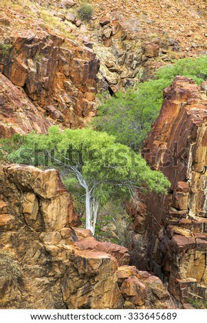 Baobab at the Epupa Falls, created by the Kunene River on the border of Angola and Namibia, in the Kaokoland area of the Kunene Region. - stock photo