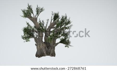 baobab isolated on white - stock photo