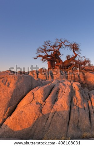 Baobab tree and rocks - stock photo