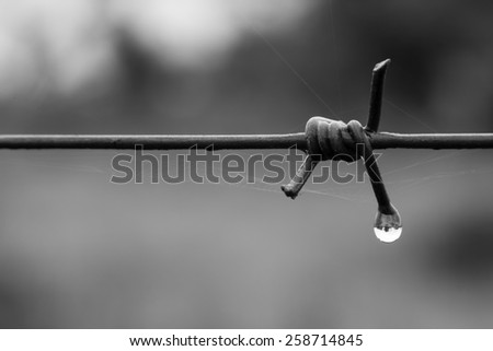 Barb wire droplet - stock photo