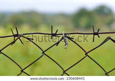 barbed wire close up - stock photo