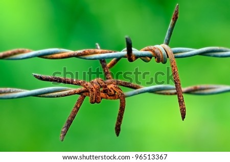 Barbed wire in green - stock photo