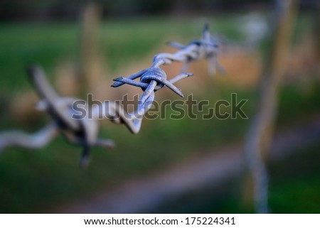 Barbed wire in the morning light. - stock photo