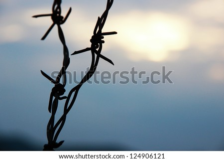 Barbed wire on sunset sky - stock photo