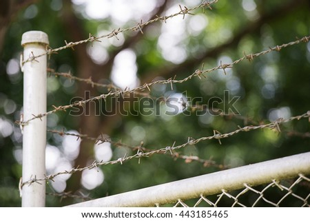 Barbed wire: security concept - stock photo