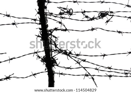 barbed wires on white background - stock photo