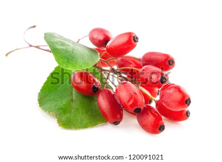 Barberry with leaves isolated on a white background - stock photo