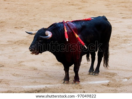 BARCELONA - JUNE 6: Injured bull during a corrida de toros or bullfight, typical Spanish tradition where a torero or bullfighter kills a bull on June 6, 2010 in Barcelona, Spain. - stock photo
