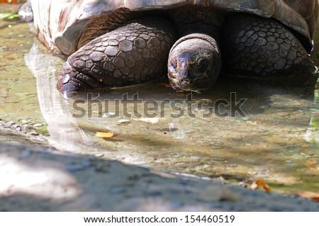 BARCELONA - SEP 3: A tortoise at the Zoo of Barcelona on September 3, 2013 in Barcelona, Spain. - stock photo