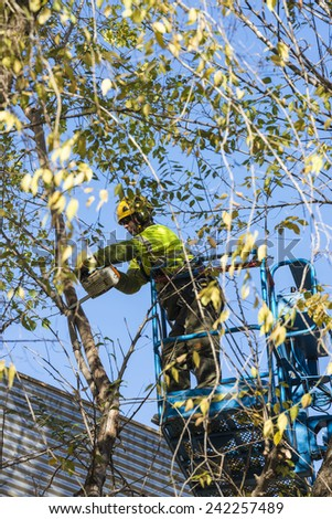 Barcelona, Spain - December 19, 2014: A maintenance worker parks and gardens pruning the branches of a tree with a chain saw to a raised platform in the old town of Barcelona