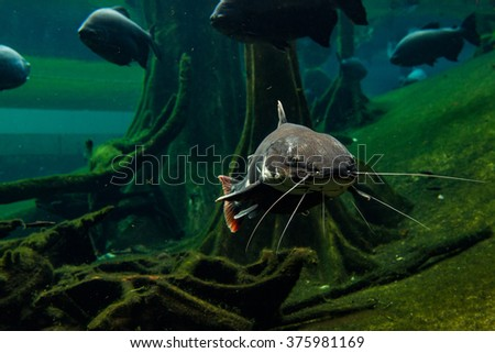 BARCELONA, SPAIN - OCTOBER 9, 2015: Exhibition in Museum of Science & Industry - stock photo