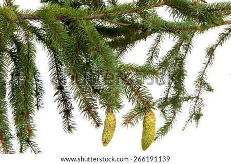 Bare branch of Christmas fir tree ready to decorate on white - stock photo