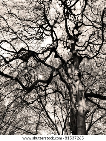 Bare branches against the sky in monochrome - stock photo