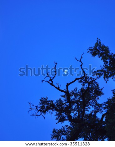 Bare branches by the moonlight at daybreak. - stock photo