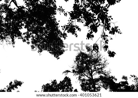 Bare branches isolated on white background