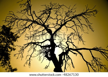 Bare branches of a giant tree in the backlight. - stock photo