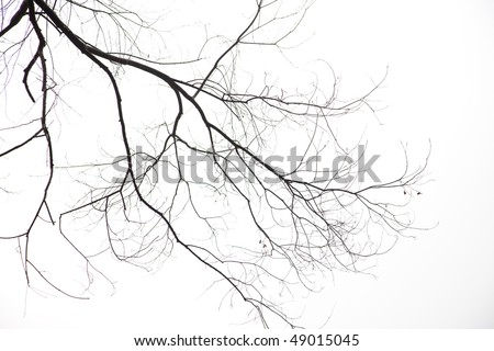Bare Branches on white background - stock photo
