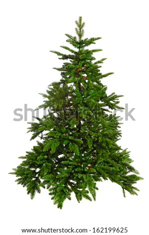 bare Christmas tree  isolated on white background - stock photo