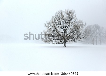 Bare deciduous tree in winter during snowstorm