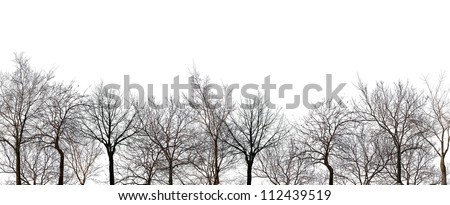 bare forest isolated on white background - stock photo