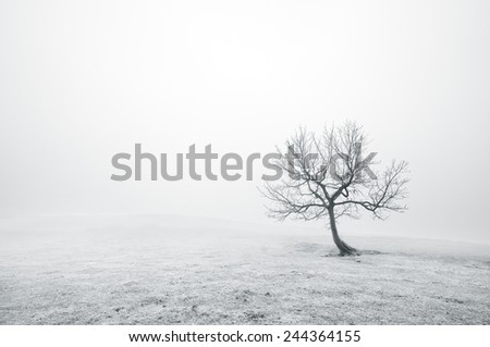 bare lonely tree with beautiful light and fog - stock photo