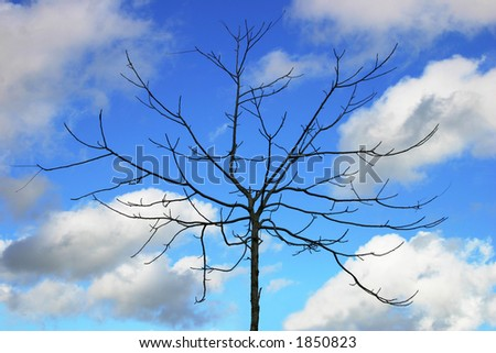 Bare tree against blue sky background with some clouds. - stock photo