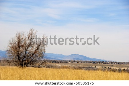Bare tree and golden field on a peaceful day under breezy clouds at the end of winter.  There are mountains on the horizon and small homes in the near distance.