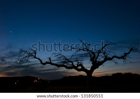 Bare tree at dusk in Portugal - stock photo
