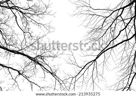 Bare tree branches on a pale white background - stock photo