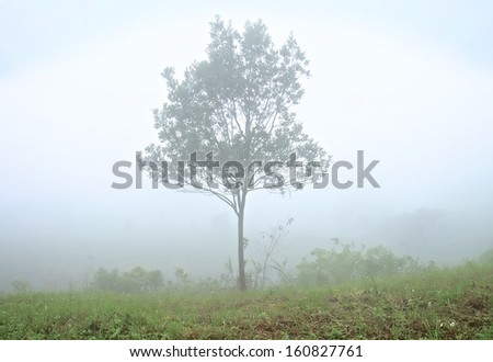 Bare Tree In A Fog Covered Field  - stock photo