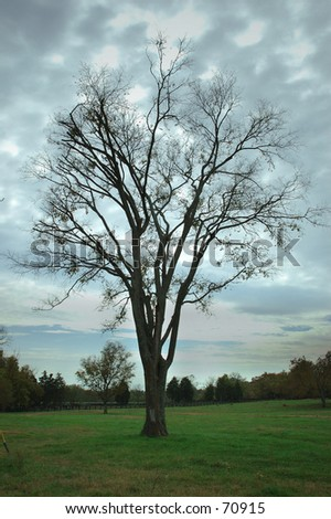 Bare Tree in Field - stock photo