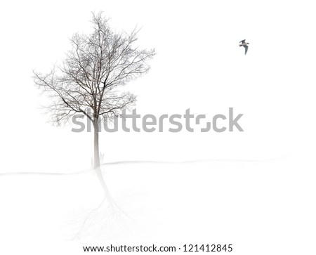 bare tree in mist on white background - stock photo