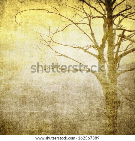 Bare tree in sepia tones - stock photo