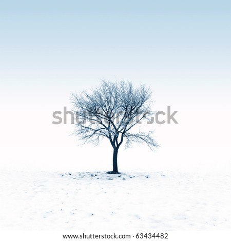 Bare tree in snow - stock photo