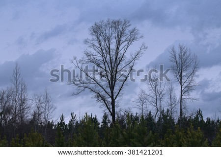 Bare Tree in Storm Clouds - stock photo