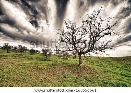 Bare tree landscape. - stock photo