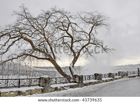 Bare tree on a Winter's day with the mist of Niagara Falls in the background
