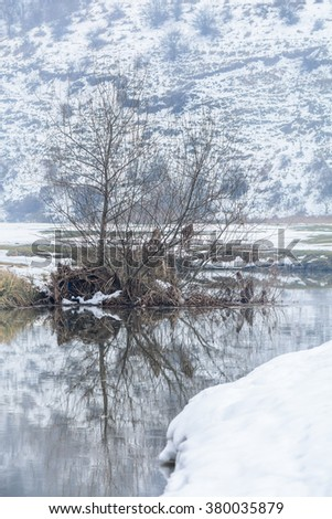 Bare tree reflection on winter lake. Vertical image with winter landscape of bare tree reflection in the lake with snow around. - stock photo