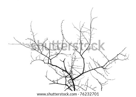 Bare tree silhouette Isolated over white - stock photo